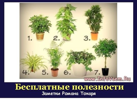 7 потрясающих растений для очистки воздуха внутри помещения